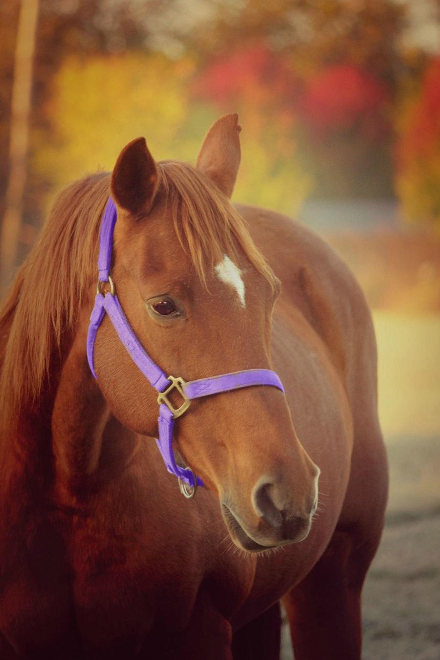 Facebook_cheval_automne
